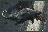 From the Roadkill series