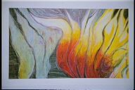 Llama Silvestre 2