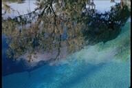 A Tree Grows In Atlantis