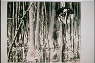 Sex Series (trees)