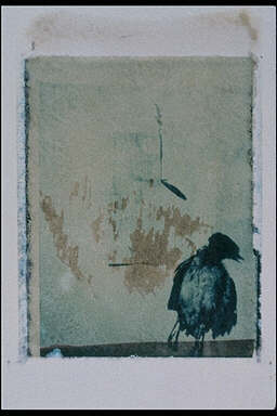 Polaroid transfer series #1 (The Bird)