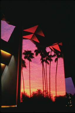 Millenial Palms