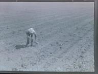 Aspragus Field Workers