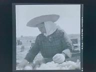 Mary Revillan(?), onion grader in the fields