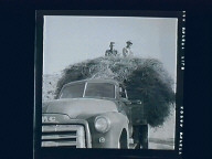 Gunlock, Henry & Gus Bowler Haying