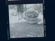 Fruit Picking, Fruit Selling
