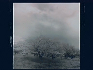 (Trees in all Seasons)