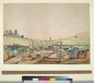 California miners working an arrastra