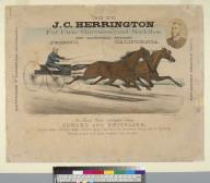 Go to J.C. Harrington for Fine Harnesses and Saddles
