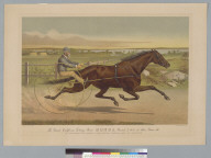 The Grand California trotting mare Sunol [horse]