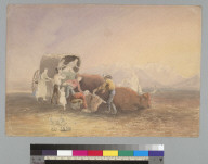 [Covered wagon in the desert: emigrants tend to fallen oxen]