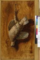 [Still life with a dead quail]