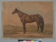 St. Julien [horse]