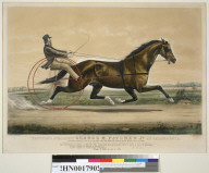 Trotting Stallion George M. Patchen, Jr. of California: by George M. Patchen, dam by bellfounder...
