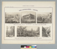 The approaches of the grove: views of the mining town of Murphy's [California]