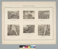 [Six views of trees]