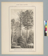 Mother of the forest, 1855 and 1861, and other groups