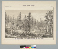 The Mammoth Grove Hotel, grounds, and general view of the forest [California]