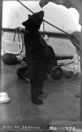 """Bear [""Pete""] on S.S. Ancon."" [negative]"