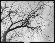 [Tree branches.] [negative]