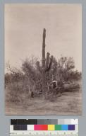 Cactus and man. [photographic print]