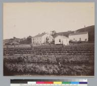Olvina Winery, Livermore, California. [photographic print]