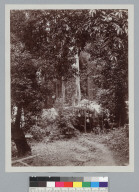Camp, with two men sitting in front of striped tent, Bohemian Grove. [photographic print]