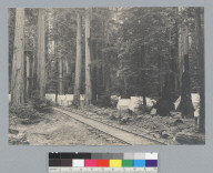 Camp with railroad tracks, Bohemian Grove. [photographic print]