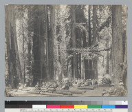 Front view of audience sitting on logs, Bohemian Grove. [photographic print]
