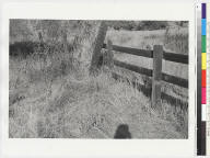 """View of """"Ishi Site;"""" same bush and fence as in previous negatives"""