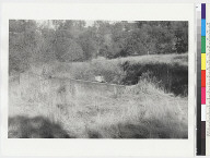 """View of """"Ishi Site;"""" view of grassy field and bush"""