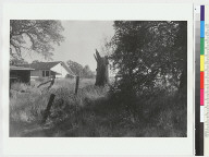 """View of """"Ishi Site;""""bush and tree stump in foreground, house in background"""