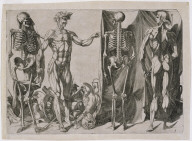 Skeletons and ecorches (Squelettes et ecorches)