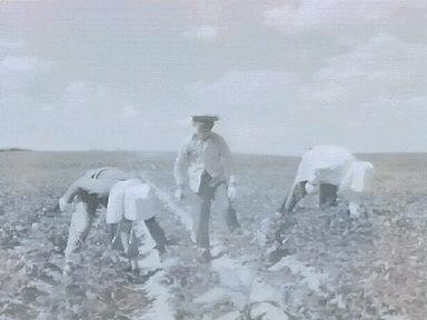 S. Dakota People in fields