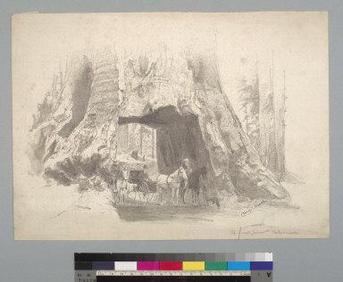 The Dead Giant, California [redwood, Mammoth Tree Grove, Calaveras County, California]
