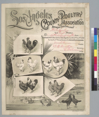 [Los Angeles County Poultry Association diploma]