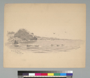 Along the coast, Fisk's Mill, Sonoma C[ounty] Cal[ifornia]
