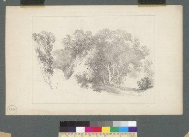 [Tree studies]
