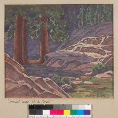 Forest Near Rush Creek [Calif.]