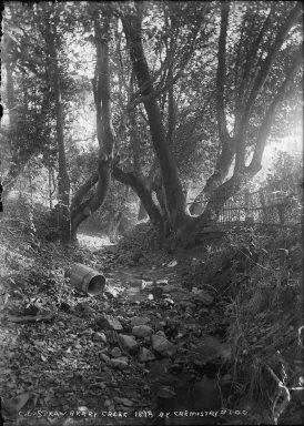 """C.U. Strawberry Creek 1898, by Chemistry Bldg,"" University of California at Berkeley. [negative]"