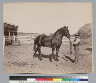 """""""Voltaic,"""" thoroughbred horse owned by J.P. Smith, and man holding reins. [photographic print]"""