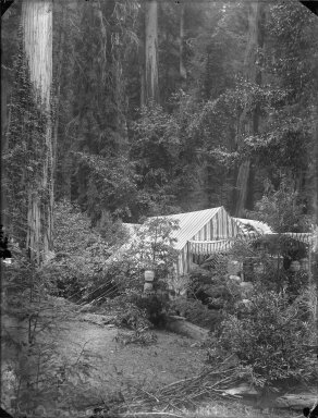Camp with striped tents, Bohemian Grove. [negative]