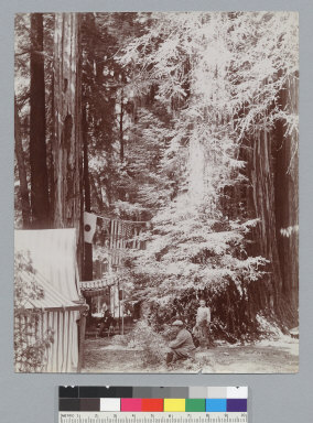 Camp with tents and flags, Bohemian Grove. [photographic print]