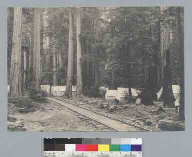 Camp with railroad tracks, Bohemian Grove. [photographic print]