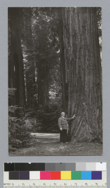 Man standing next to redwood tree, Bohemian Grove. [photographic print]