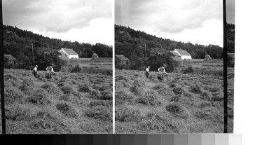 A hay field. Scotland.